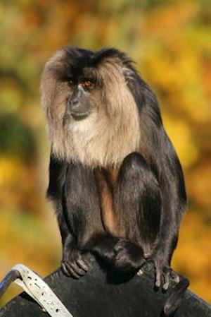 Bog, paperback Lion-Tailed Macaque (Macaca Silenus) Aka Wanderoo Journal af Cool Image