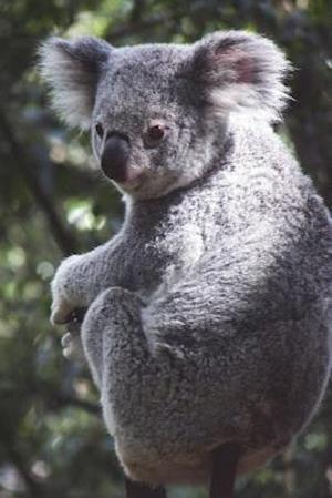 Bog, paperback Say Hello to the Queensland Koala Journal af Cool Image