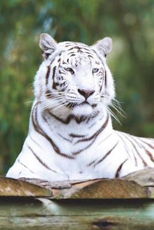Bog, paperback Say Hello to the White Tiger Journal af Cool Image