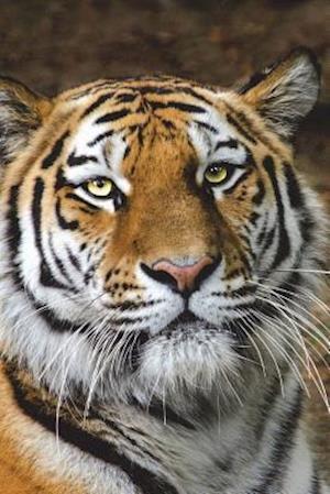 Bog, paperback Siberian Tiger Journal af Cool Image