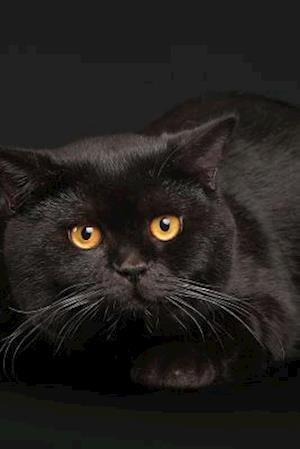 Bog, paperback Beautiful Black Cat Laying in Front of a Black Backdrop af Unique Journal
