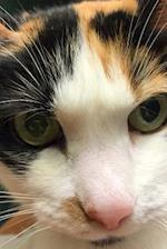 Close-Up of a Calico Cat Journal