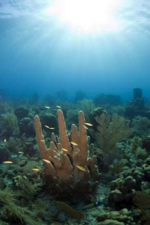 Bog, paperback Pillar Coral in Coral Gardens Off Coast of Roatan Honduras Journal af Cool Image