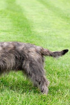 Bog, paperback Glen of Imaal Terrier af Artified Pets