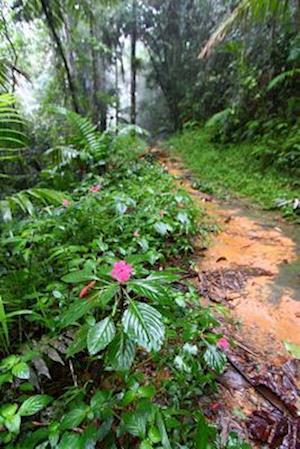 Bog, paperback Rainforest Path in Puerto Rico USA Journal af Cs Creations