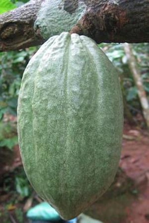 Bog, paperback Cacao Seeds Journal af Cool Image