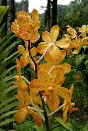 Bog, paperback Yellow Orchids Flower Journal af Cool Image