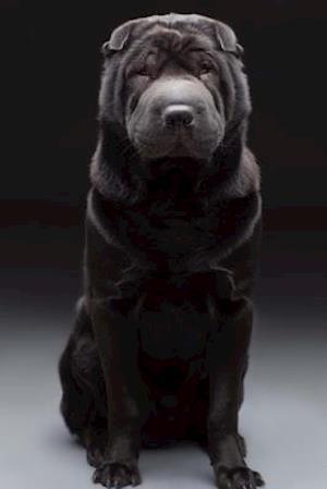 Bog, paperback A Beautiful Black Shar Pei Dog Journal af Cs Creations