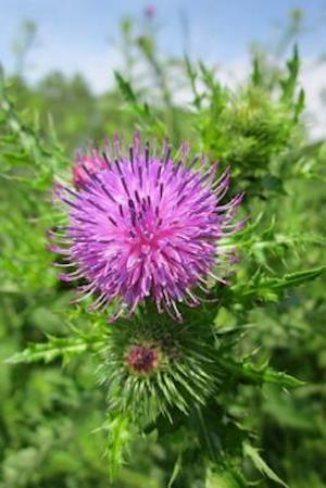 Bog, paperback Carduus Acanthoides Spiny Plumeless Thistle Flower Blooming af Unique Journal