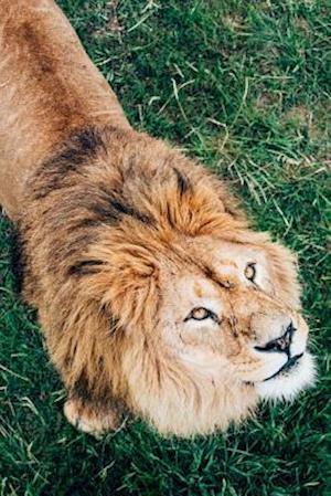 Bog, paperback African Lion on the Savannah Looking Up Journal af Cs Creations