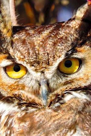 Bog, paperback Up Close with a Great Horned Owl Journal af Cs Creations