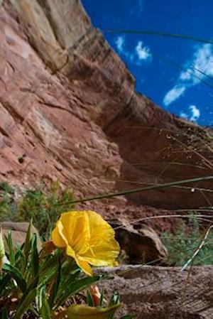 Bog, paperback Yellow Evening Primrose in Capitol Reef National Park Utah USA Journal af Cs Creations