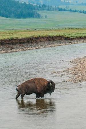 Bog, paperback Wild Buffalo Crossing a River Journal af Cs Creations