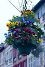 Beautiful Floral Arrangement on the Street in Bayonne France Journal