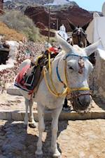 White Donkey on Old Stone Stairs in Oia Santorino Greece Journal