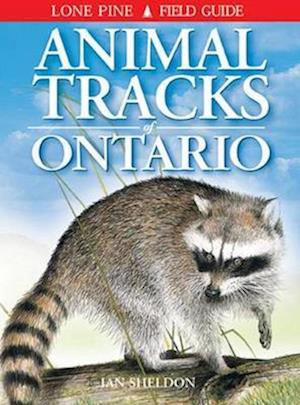 Bog, paperback Animal Tracks of Ontario af Ian Sheldon
