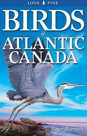 Bog, paperback Birds of Atlantic Canada af Roger Burrows