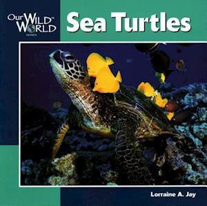 Bog, paperback Sea Turtles af Lorraine A. Jay