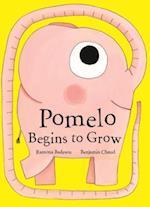 Pomelo Begins to Grow af Benjamin Chaud