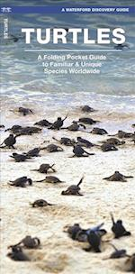 Waterford's Discovery Guide Turtles (Waterfords Discovery Guides)