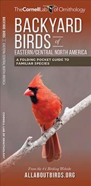 Bog, paperback Backyard Birds (East/Central Us)