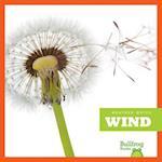 Wind (Weather Watch)