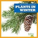 Plants in Winter (What Happens in Winter)