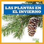 Las Plantas En El Invierno / Plants in Winter (Que Pasa en el Invierno What Happens In Winter)