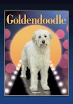 Goldendoodle (Designer Dog)