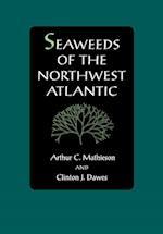 Seaweeds of the Northwest Atlantic