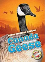 Canada Geese (North American Animals, nr. 28)