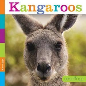 Bog, paperback Kangaroos af Quinn M. Arnold