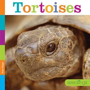 Bog, paperback Tortoises af Quinn M. Arnold