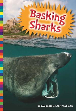 Bog, paperback Basking Sharks af Laura Hamilton Waxman