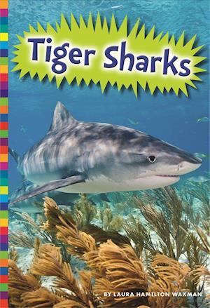 Bog, paperback Tiger Sharks af Allan Morey