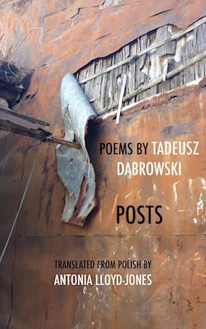 Bog, paperback Posts af Tadeusz Dabrowski
