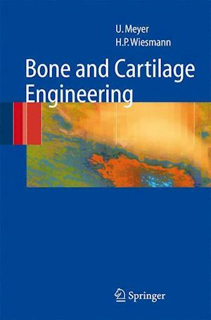 Bone and Cartilage Engineering af Thomas Meyer