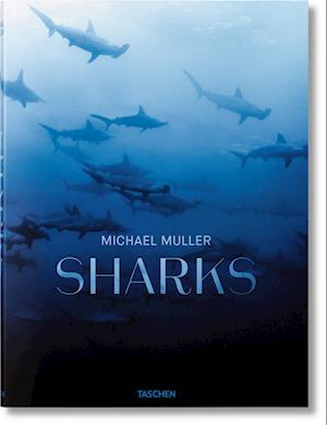 Sharks af Michael Muller