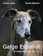 Galgo Espanol