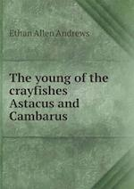 The Young of the Crayfishes Astacus and Cambarus af Ethan Allen Andrews