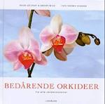 Bedårende orkideer fra alle verdenshjørner