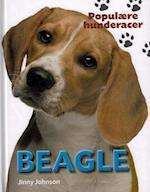Beagle (Populære hunderacer)