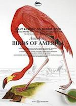 Audubon's Birds of America (Giant Artists Colouring Books)